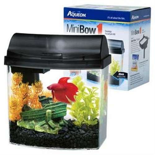 5 best aquarium kits a colorful decorations tool box for Fish for 2 5 gallon tank