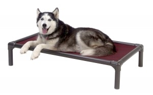 Elevated Pet Bed - Provide all year round comfort for your pet