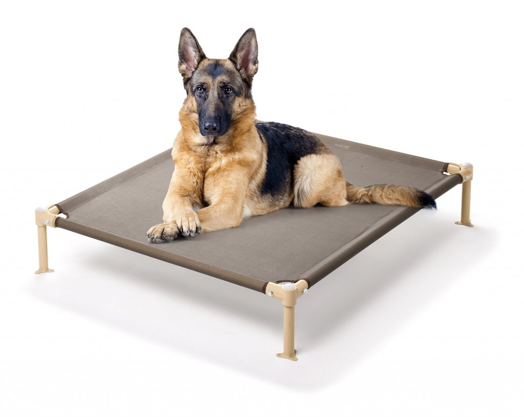5 Best Elevated Pet Bed Provide All Year Round Comfort