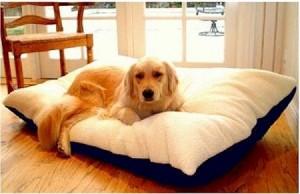 5 Best Pet Pillow Bed – Deliver maximum comfort for your pet