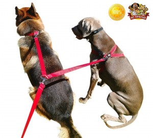 8 Foot Long Leash Gives Your Dogs