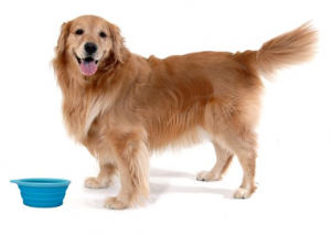 Collapsible Pet Bowl - Convenient solution for on-the-go feeding