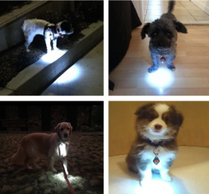 Dog light Collar - Be safe at night