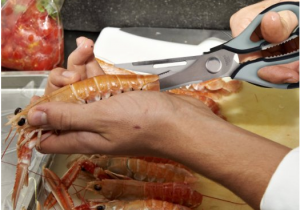Seafood Shears - Eating seafood is much easier now