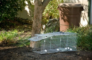 Rodent Trap Cage - Trap unwelcome animals without harm