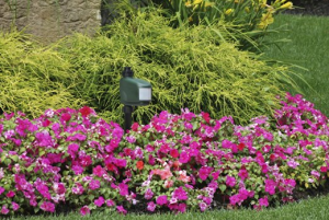Motion Activated Sprinkler - Protect your garden and property
