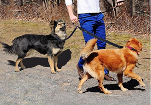 Double Dog Leash Coupler - Enjoy walking your two dogs together