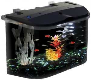 5 Best Aquarium Kits – A colorful decorations
