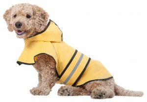 5 Best Dog Rain Jacket – Keep your dog dry and comfortable in the rain