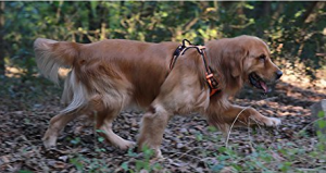 no-pull-dog-harness-stop-dogs-from-pulling