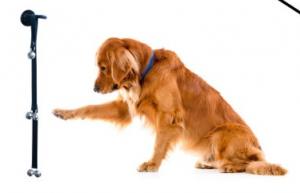 housetraining-dog-doorbells-housetraining-your-dog-has-never-been-easier