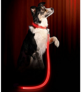 5 Best LED Dog Leash – Give your dog the safety he/she deserves