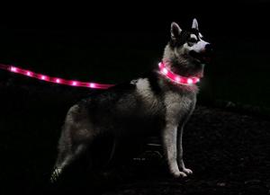 led-dog-leash-give-your-dog-the-safety-heshe-deserves