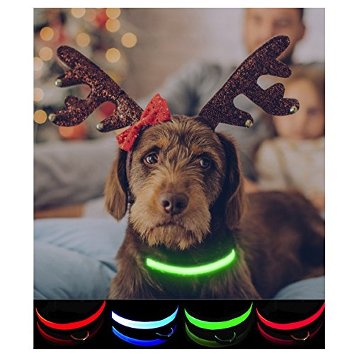 petabunga-premium-led-dog-collar