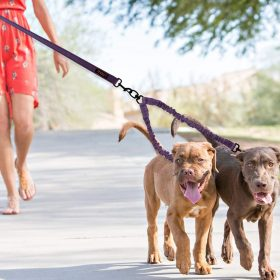 Dual Dog Leash